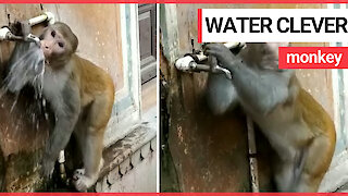 This is the moment a monkey caught drinking water from a street tap