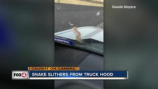 Snake slithers from truck hood in Texas - Video