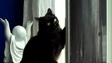 Cats go crazy watching snow, try to catch snowflakes