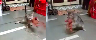 Adorable Kitten Love Ro Play With Comfort Toy