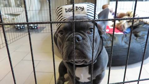Puppy behind bars wants to