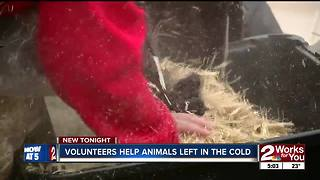 Volunteers help dogs left outside in cold temps - Video