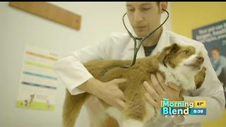 State of Pet Health - Video