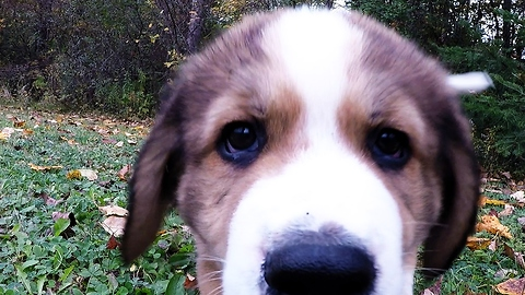 """Nine fluffy puppies come to """"attack"""" GoPro"""