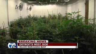 Massive $500,000 marijuana grow operation busted in Detroit - Video
