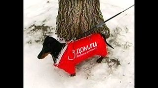Siberian Dog Billboards - Video