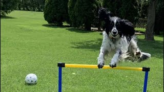 Dog jumps in slow motion