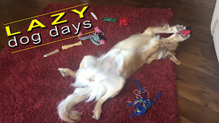 World's most relaxed dog plays with her toys