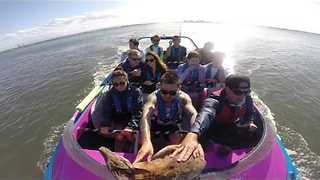 Jet Boat Rescues Wallaby From Drowning After Escaping Dog - Video