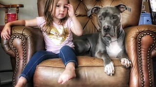 Little girl wakes up pit bull for playtime - Video