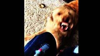 Dog goes completely berserk over woman's torn jeans