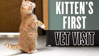 Kitten's First Vet Visit - Video