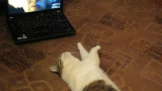 Musya the cat Skypes with her owner - Video