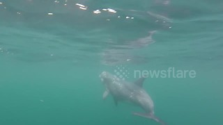 Cool encounter with dolphin off Cornwall, UK - Video