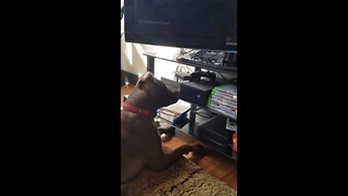 Curious dog accidentally turns on Xbox - Video