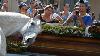 Horse cries when say godbye to his deceased human in tragic accident - Video