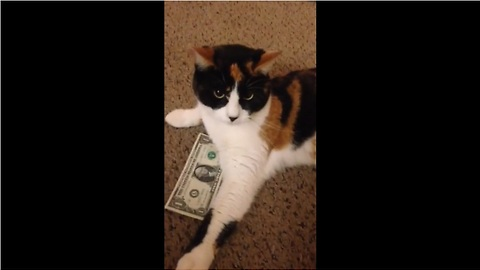 Frugal feline refuses to give up dollar bill