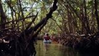 Kayaking Mangrove Tunnels in Florida - Video