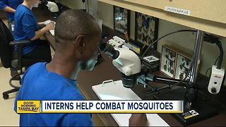 Interns help combat zika virus at Hillsborough County mosquito control - Video