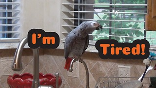 Einstein the Parrot is a very tired bird!