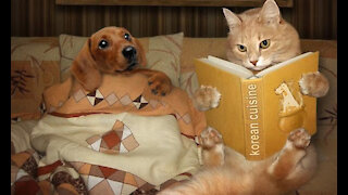 funniest dogs and cats 2020