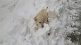 Dog ecstatic about first snow experience - Video