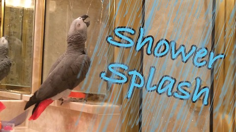 Baffled parrot tries to play with water