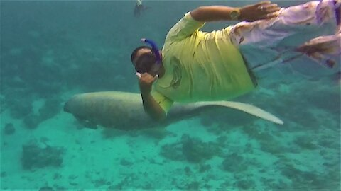 Thrilled swimmer meets manatee on the reef in Belize