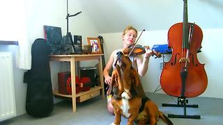 Basset Hound sings along during violin practice - Video