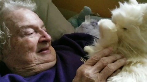 Woman's Reaction To Being Given A Robotic Cat Is Sure To Melt Your Heart …