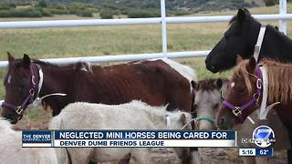 16 adorable mini horses are the latest displaced Houston animals to arrive in Colorado - Video