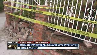 Teen arrested after crashing car with pot plants - Video