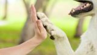 Does Your Pet Make You Social? - Video