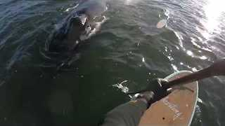 New Jersey Paddleboarder Has Incredibly Close Encounter With Humpback Whale - Video