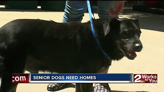 Senior dogs need homes