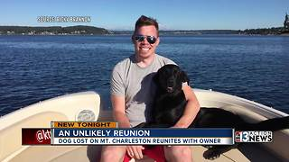 Dog reunited with owner after five days on Mt. Charleston - Video