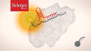 Science explains: CRISPR diagnostics