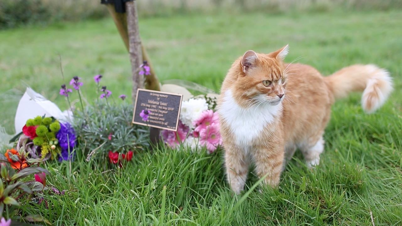 I'VE GOT A FELINE I'M NEEDED! CAT WITH SIXTH SENSE WHO TURNS UP TO FUNERALS  BECOMES SURROGATE PET TO MUM WHO LOST DAUGHTER TO BREAST CANCER