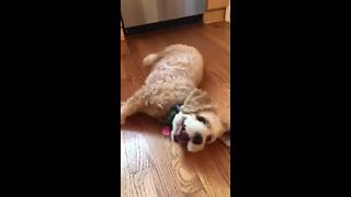 Adorable dog is too excited to roll over