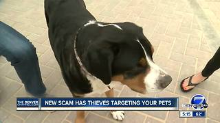 New scam has thieves targeting your pets - Video