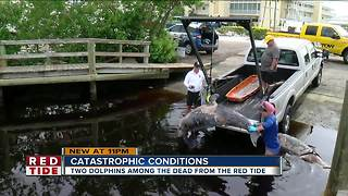 6 bottlenose dolphins found dead in Sarasota County in 24-hours - Video