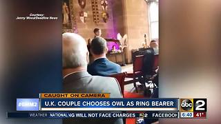 Ring bearer owl attacks best man at wedding