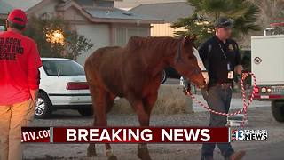 Horses and roosters seized from Las Vegas home - Video