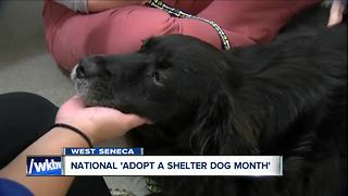October is 'National Adopt a Shelter Dog Month' and the SPCA has lots of friends for you! - Video