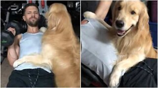 Best friends! This loyal dog won't leave his owner alone even in the gym!
