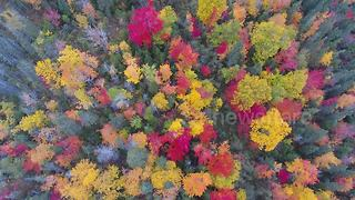 Gorgeous 4K drone footage of fall foliage in Newfoundland