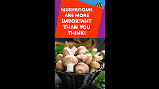 Top 15 Facts About Mushrooms You Didn't Know