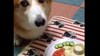 Drooling dog redefines the meaning of patience - Video