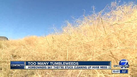 Aurora neighborhood overrun by tumbleweeds; neighbors seeking help from city