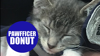 Kitten is enjoying new role as police department's first official 'pawifficer' - Video